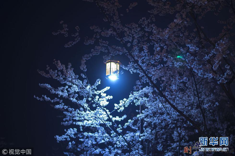 半天的折腾、扬州的樱花、未来的自驾